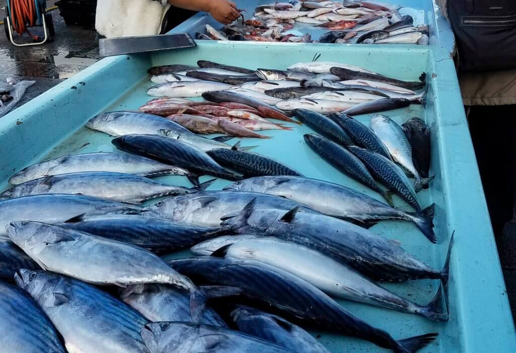 France Marseille fish market