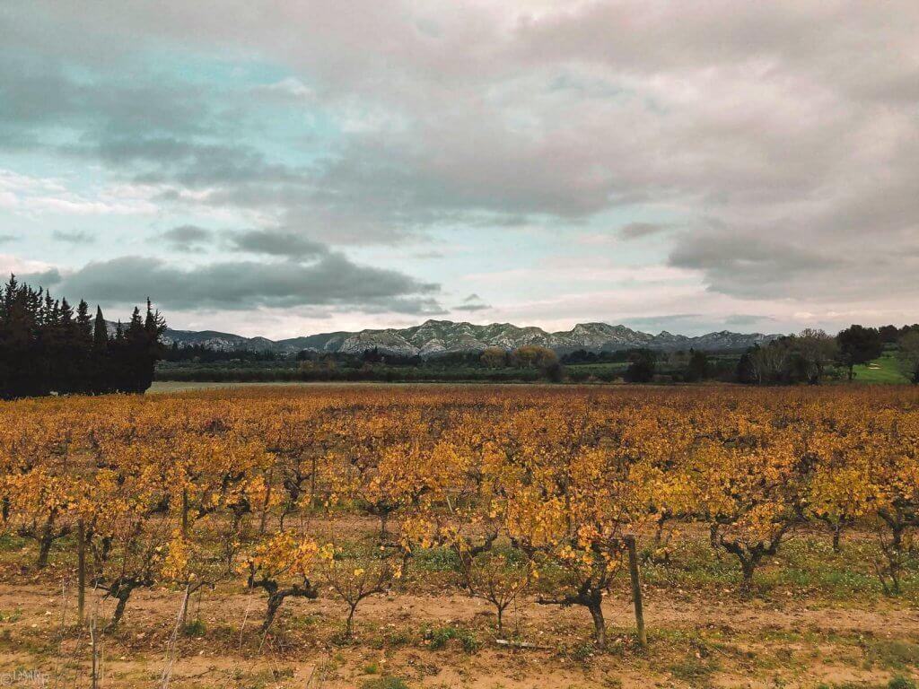 France Luberon vineyard November